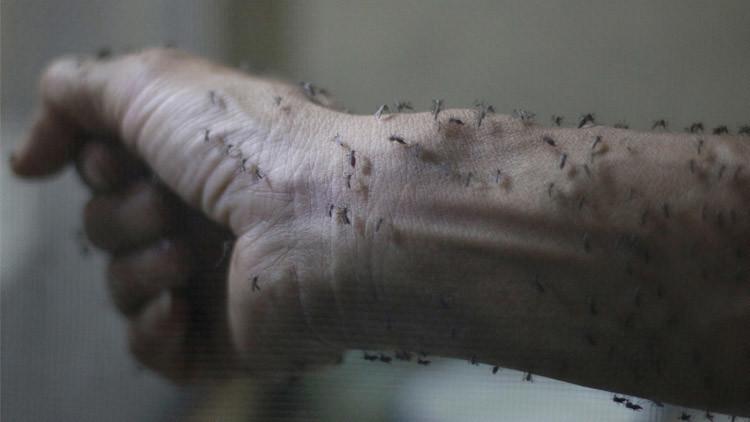 """حمى """"زيكا"""" قد تصبح وباء شاملا"""