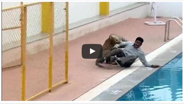 بالفيديو : نمر يهاجم عاملا داخل إحدى المدارس بالهند