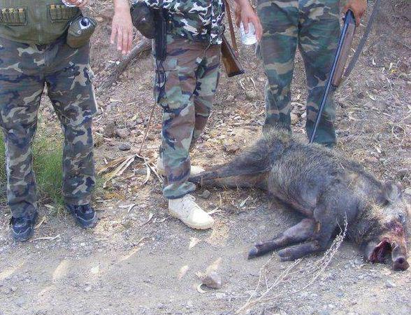 تنظيم عملية إحاشة الخنزير البري بجماعة آيت وفقا