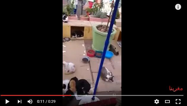 أكادير: في مبادرة جميلة .. متطوعون يبدعون مكانا خاصا للقطط