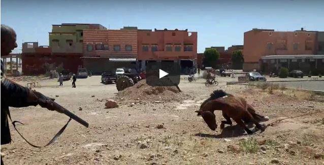 بالفيديو : لحظة إطلاق الرصاص على حصان مسعور