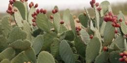 cactus_771571442