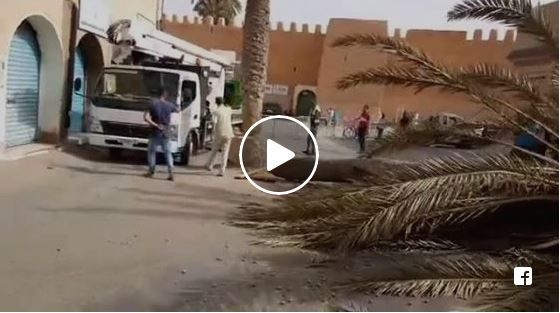 فيديو : اقتلاع النخلة التي تؤتث ساحة الجامع الكبير بتيزنيت
