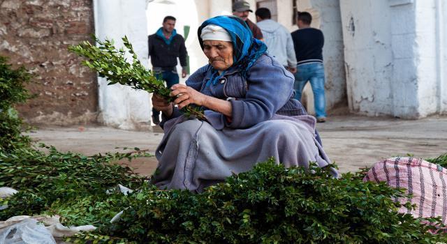 المندوبية السامية للتخطيط: واحدة من كل ستة أسر ترأسها امرأة