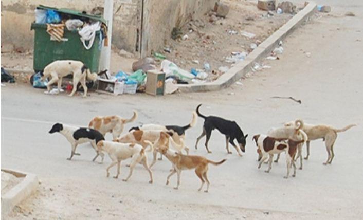 الداخلية تخصي الكلاب للحد من تكاثرها..!!