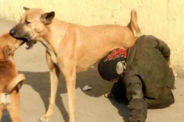 وزارة الداخلية تدخل على خط صورة شرب مواطن لحليب من ثدي كلبة بتزنيت
