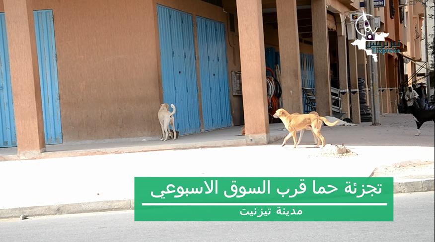 قطعان من الكلاب الضالة تجوب شوارع تيزنيت