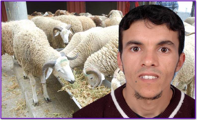 سيدي إفني : مرض يصيب قطيع من الماشية والكسابة يتخلصون منه ببيعه في الاسواق قبل نفوقه