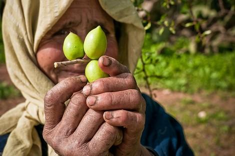 شجرة الأركان عنوان للتنمية المستدامة