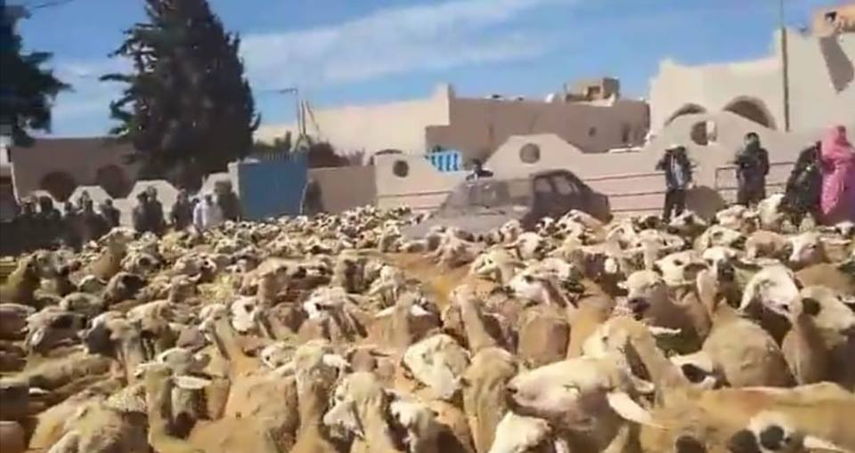 ساكنة أربعاء الساحل تنتفض ضد الرعي الجائر وتحتجز قطيعا من أغنام في ملكية الرحل