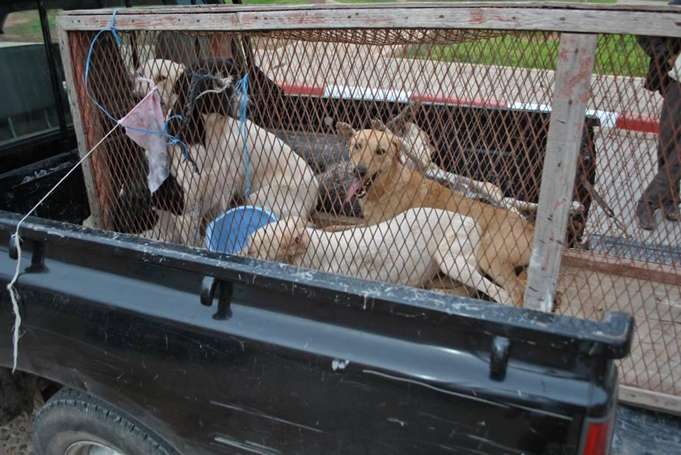 إنفلونزا الكلاب.. خطر جديد يهدد حياة الناس