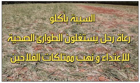 أكلو : في زمن الحجر الصحي…جحافل أغنام  الرحل تجتاح مزروعات فلاحي سيدي داوود