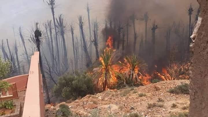 """تافراوت : حريق مهول يلتهم واحة """" گدورت"""" بأفلا إغير"""