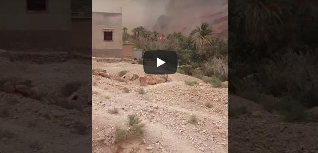 """تافراوت : حريق مهول يلتهم واحة """" گدورت""""  بأفلا إغير  ( فيديو )"""